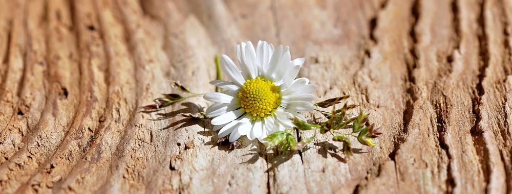 Blume auf Holz