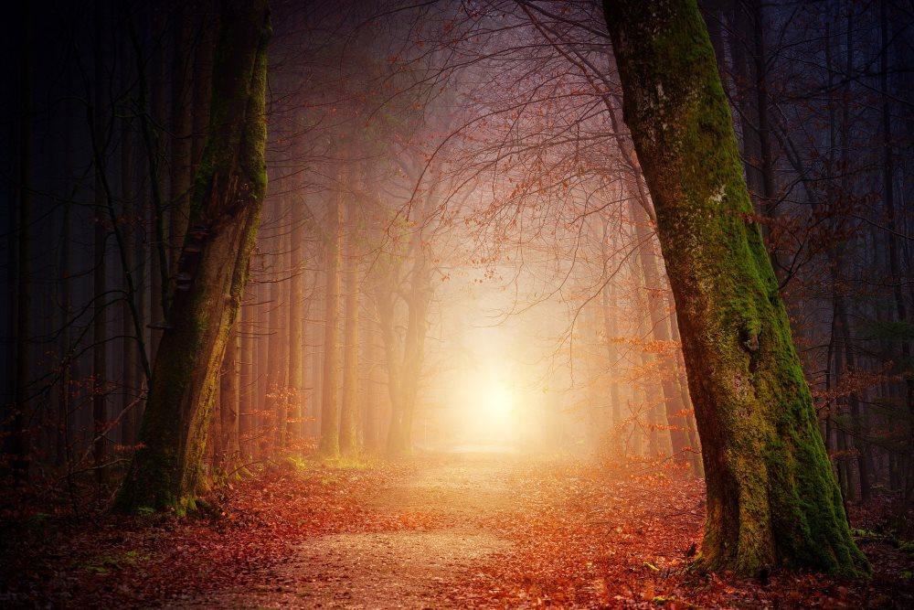 Sonnenaufgang in Baum Alee