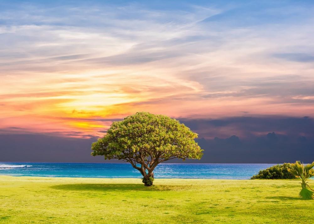 Baum am Meer mit Sonne