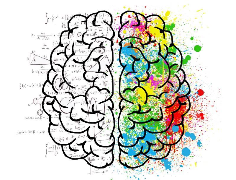 Gehirn Synapsen