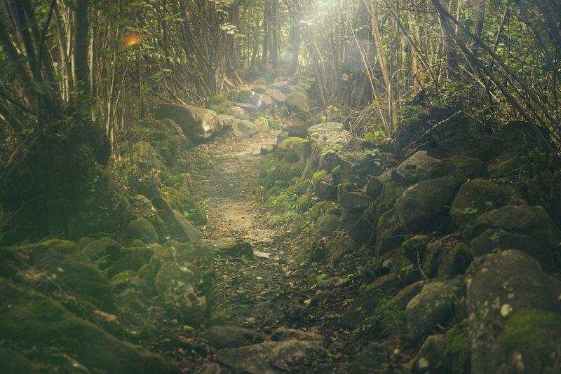 Waldweg Wald gehen